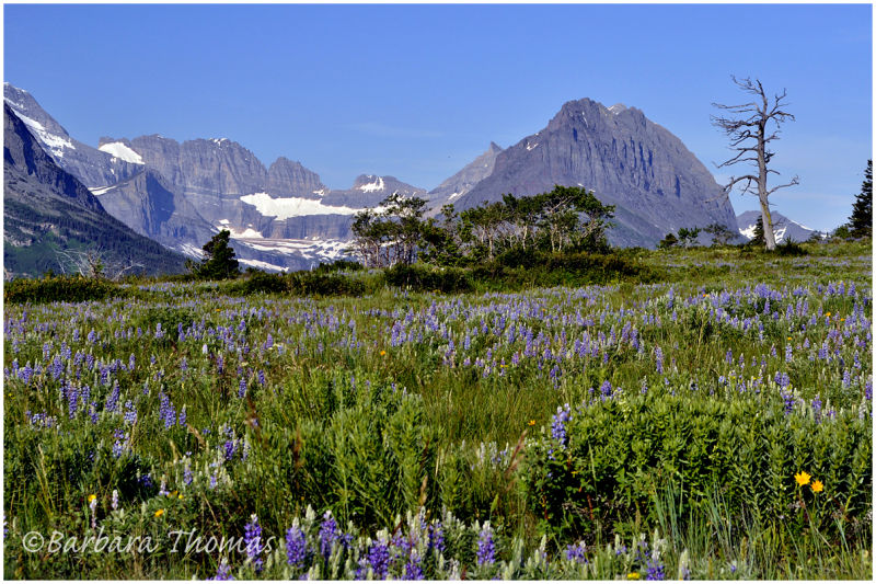 Many Glacier Meadow