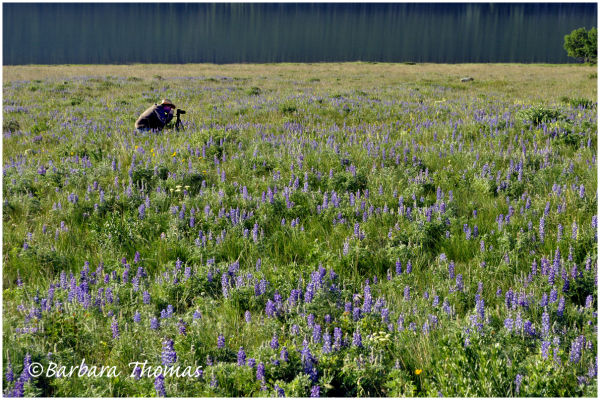 This Meadow is not Big Enough for Both of Us