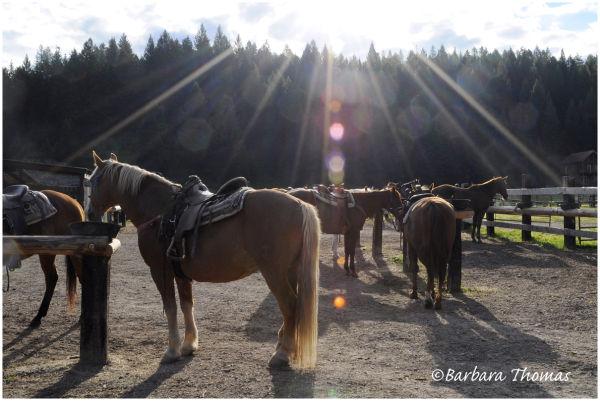 Heavenly Horses?