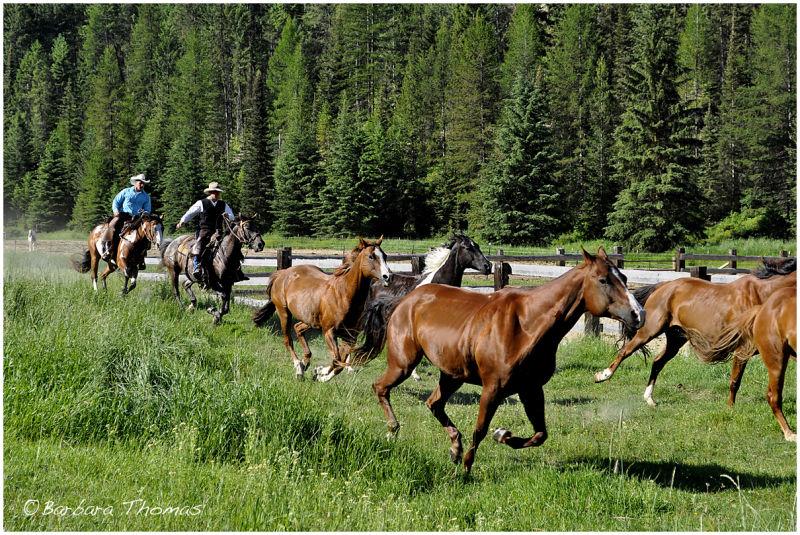 Ranch Roundup