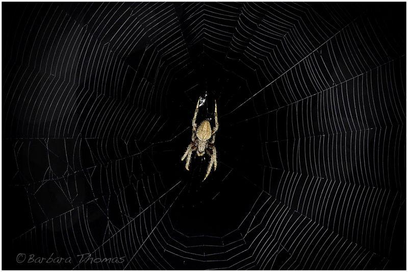 Night Visitor 2