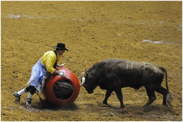 Bull Fighting - Texas Style