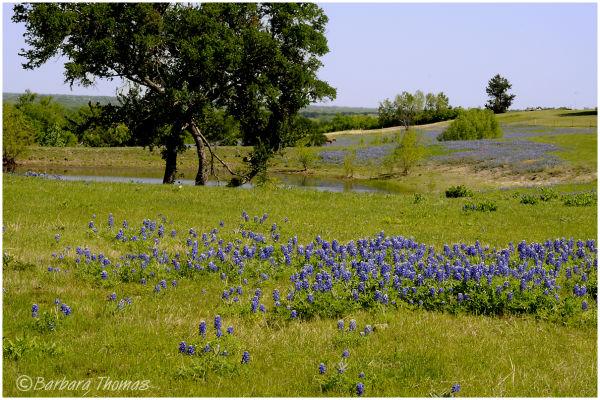 Rural East Texas
