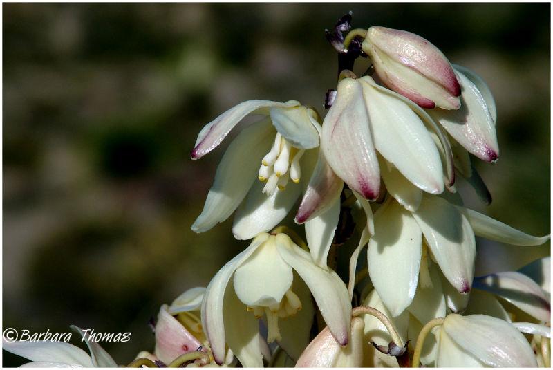 Desert Blooms Detail