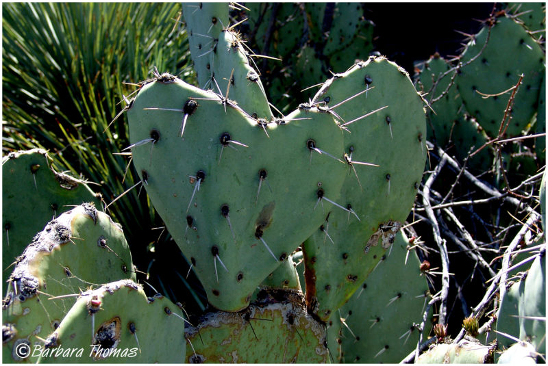 I ♥ Cactus