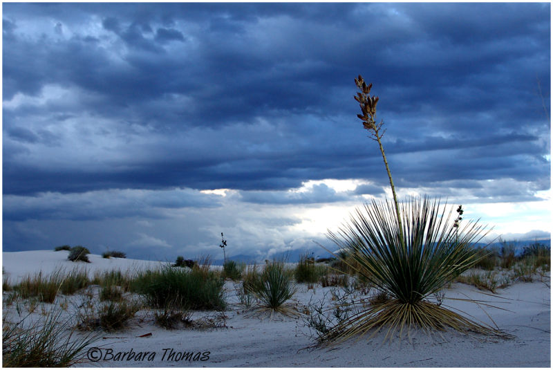 Lilke a Storm in the Desert