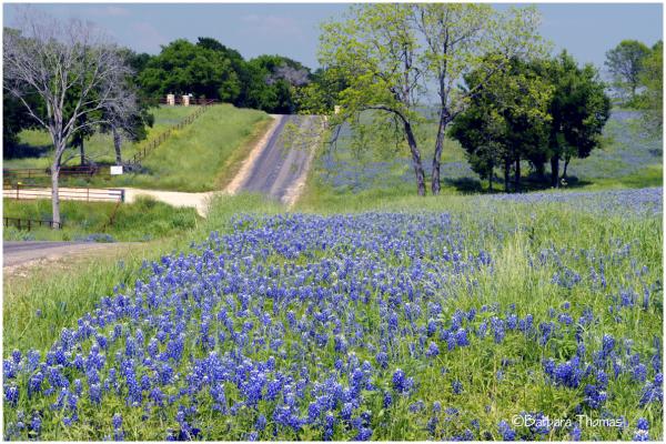 Along the Bluebonnet Trail