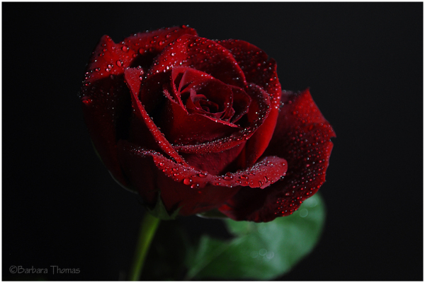 Like Red On A Rose