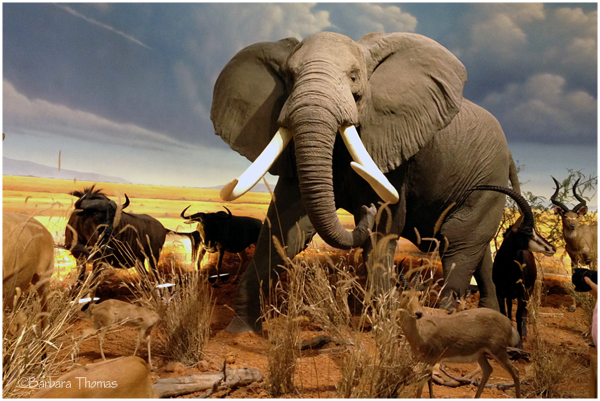 Elephant Photo Safari