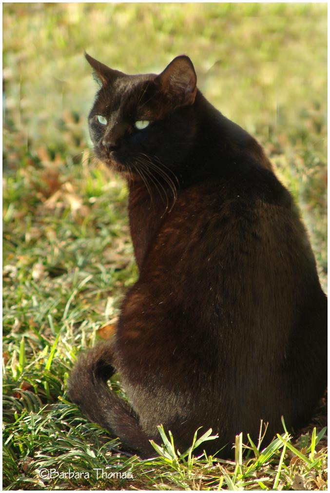 Blackie in the Sun