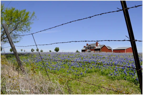 Red, White & Bluebonnets