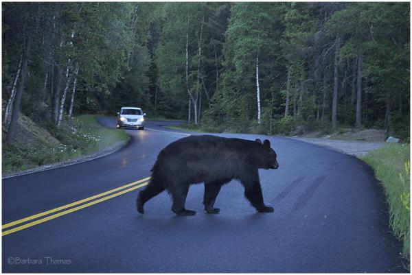 Bear Left