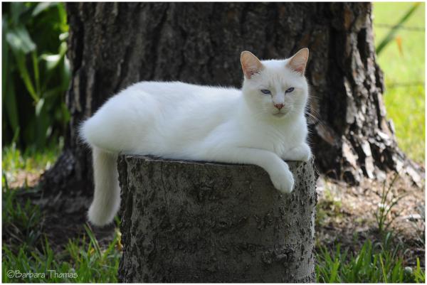Aspen cat