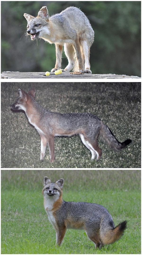 Foxy Make-Over