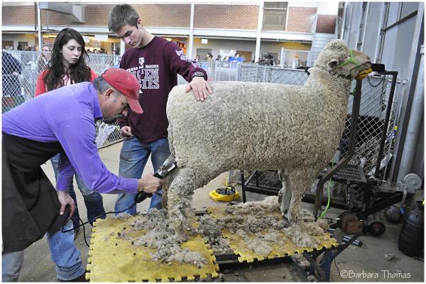 Shear Delight