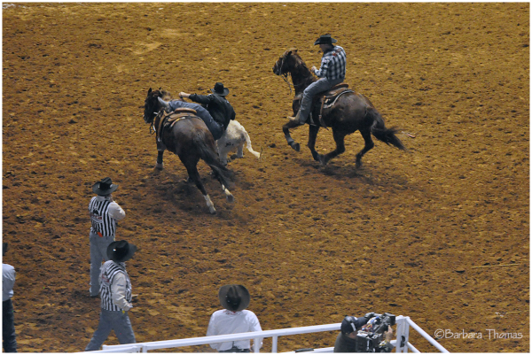 Rodeo - Steer Wrestling