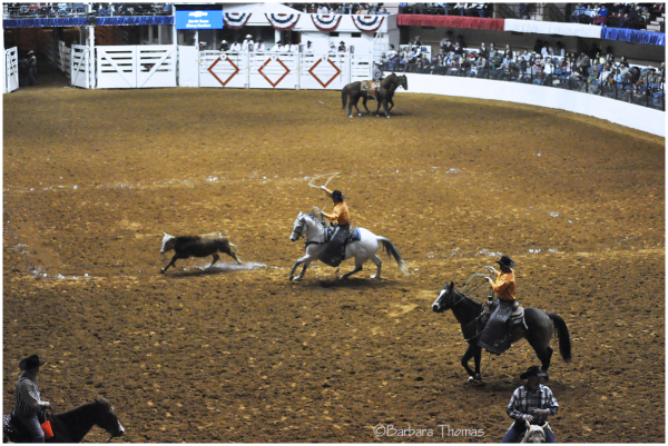 Rodeo - Calf Roping