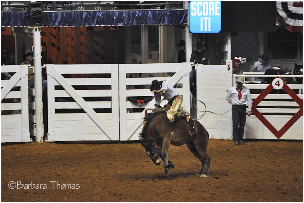 Rodeo - Bronc Riding
