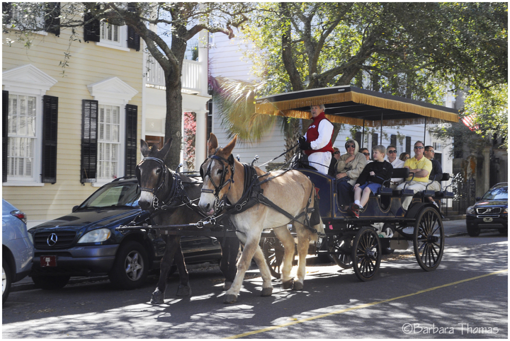 Charleston by Carriage