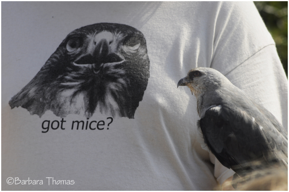 ST Got Mice?