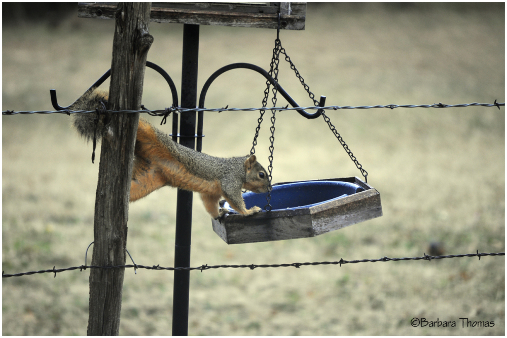 ST The Feeder is Empty
