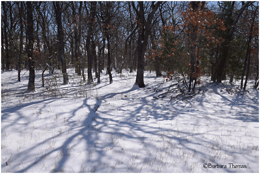 Snow and Shadows