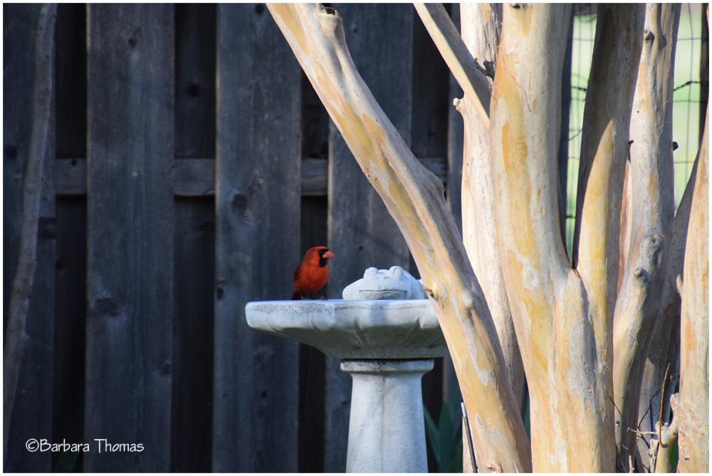 A Cardinal & A Frog