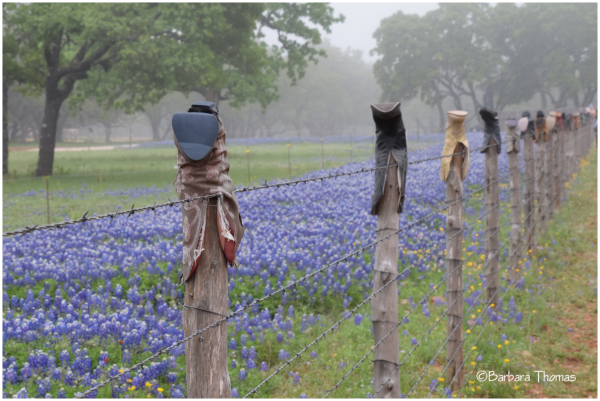 Boot Scoot Through The Bluebonnets