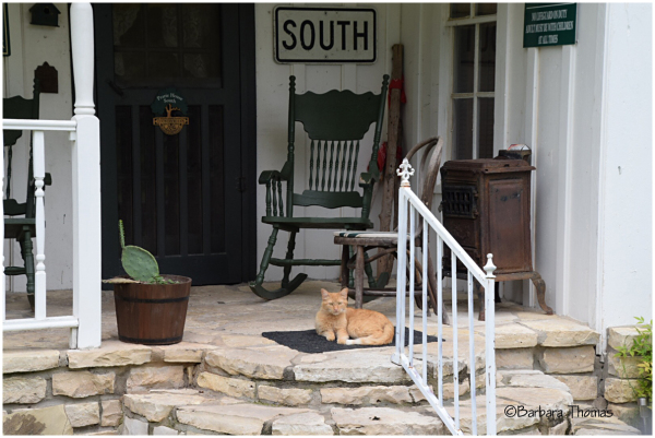 Front Porch Kitty