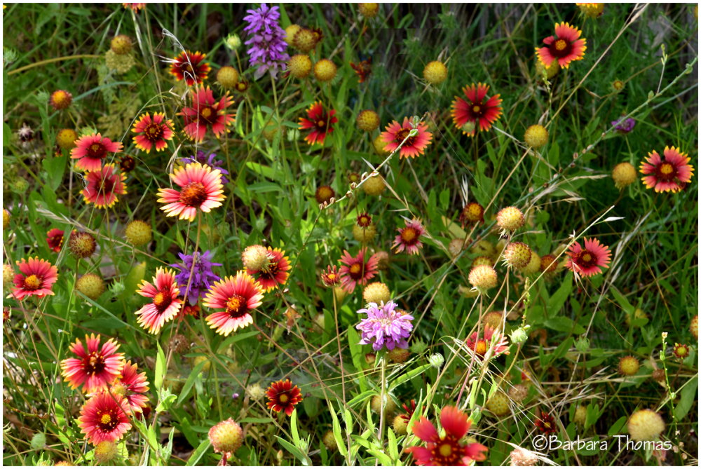 Wildflower Mix