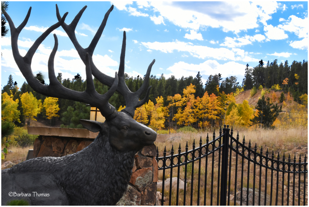 Elk At The Gate