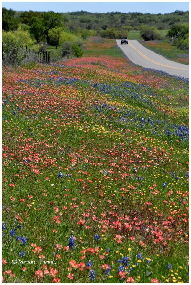 Texas Wildflowers!