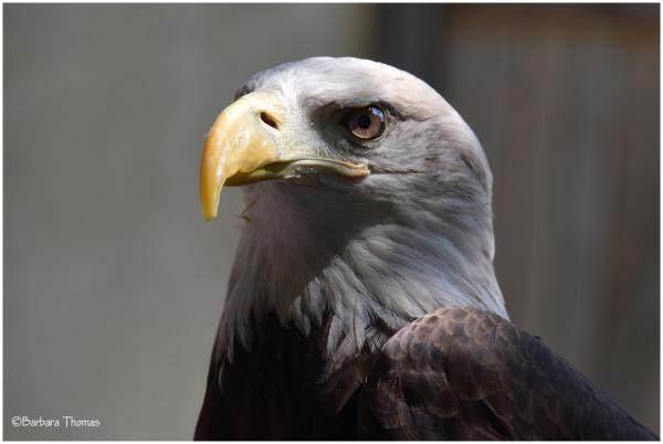 Last Chance Eagle