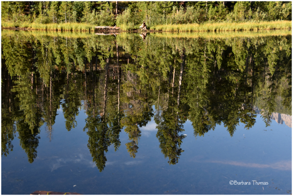Lily Lake Reflections