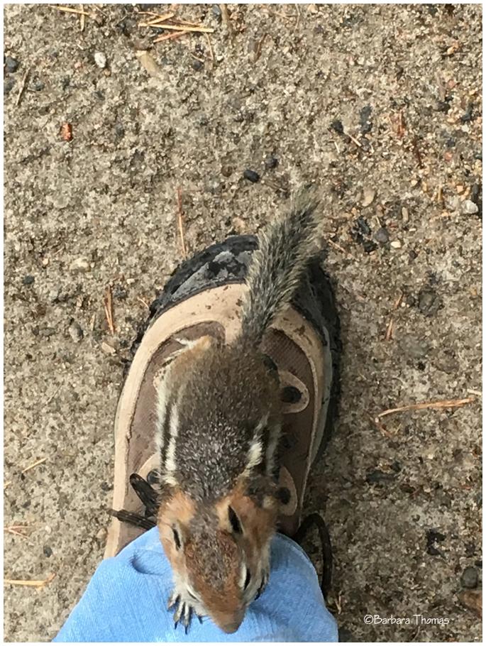 Boot Beggar