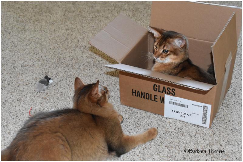 A Boxed Set