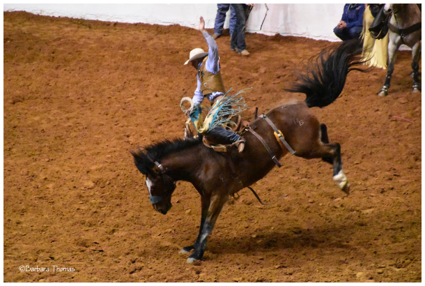 Ride 'Em Cowboy! #1
