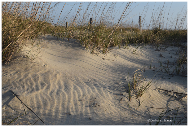 Tybee Island Sand Dunes