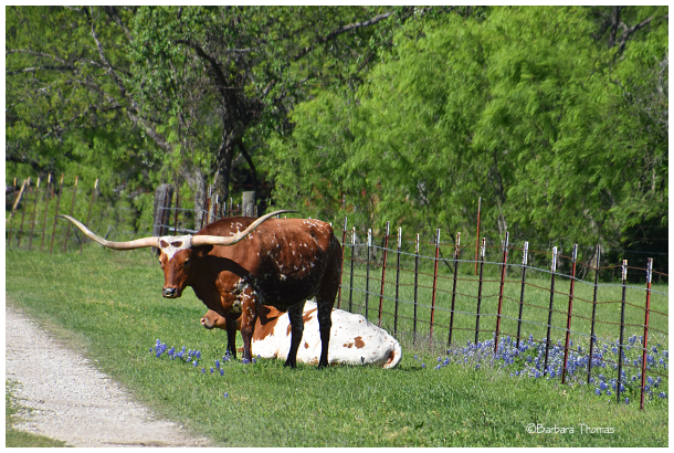 Springtime In Texas #3