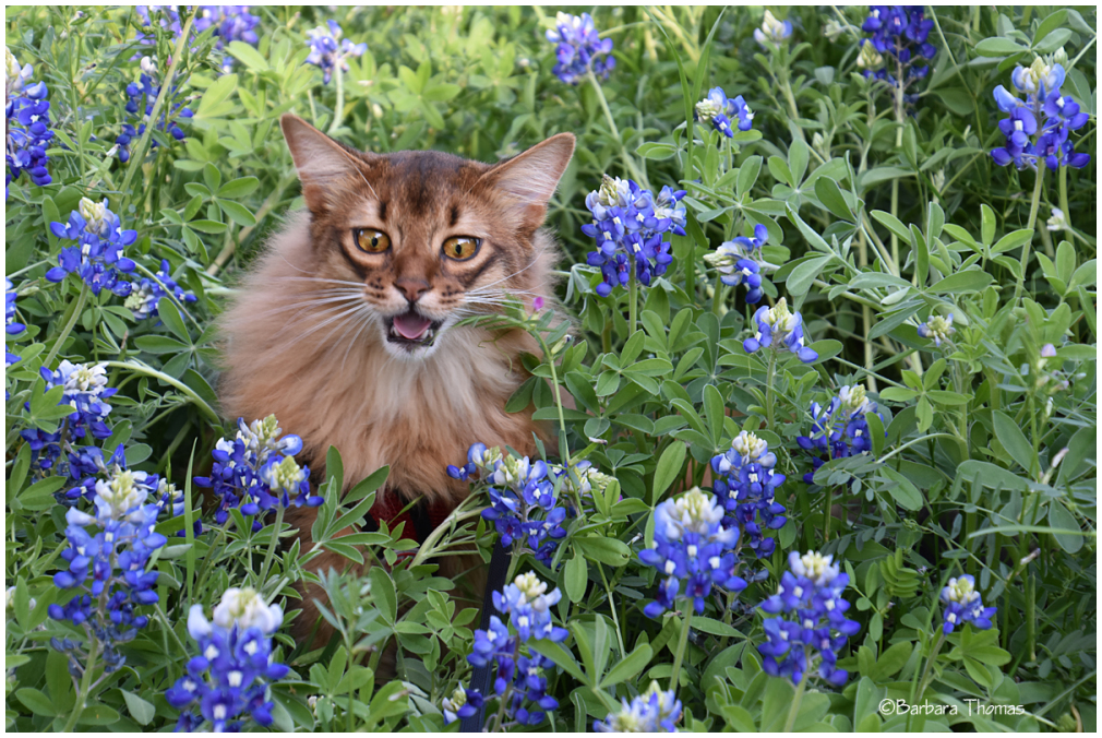 Nikon Playing In The Bluebonnets