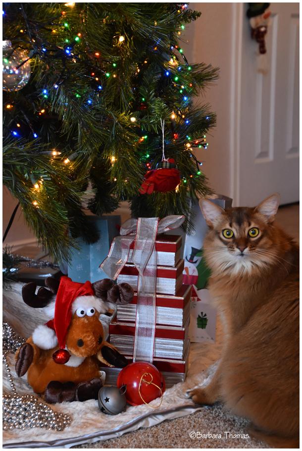 Nikon Under The Tree