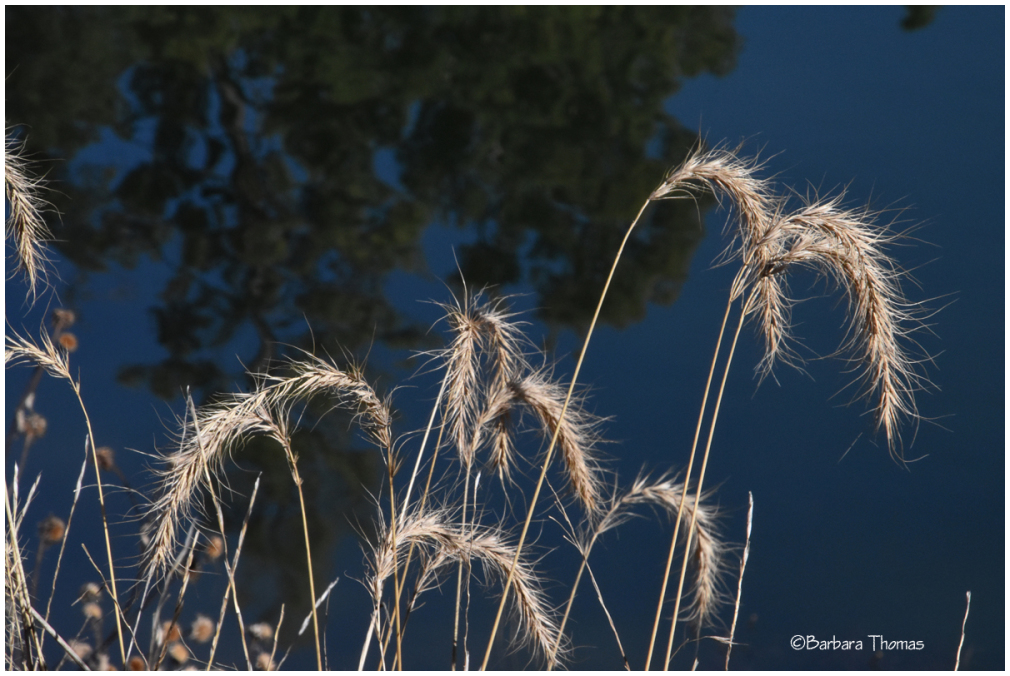 Dry Grasses By The Lake