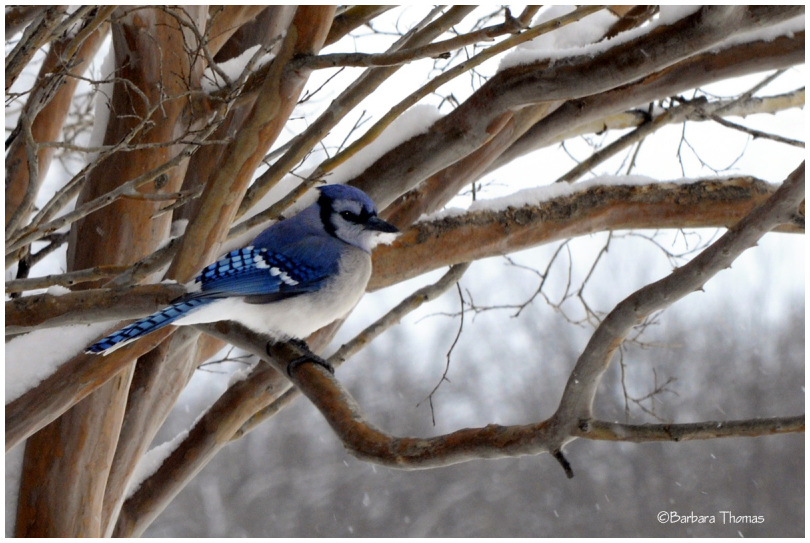 Cold Jay
