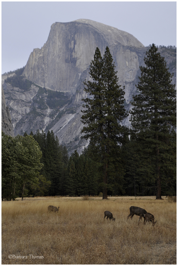 In The Shadow Of Half Dome