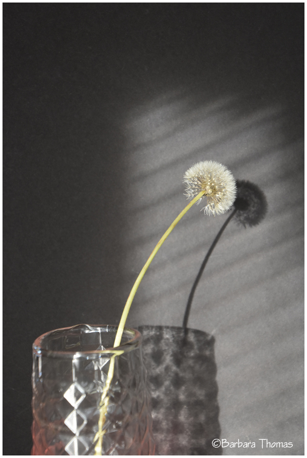 Dandelion - Me And My Shadow