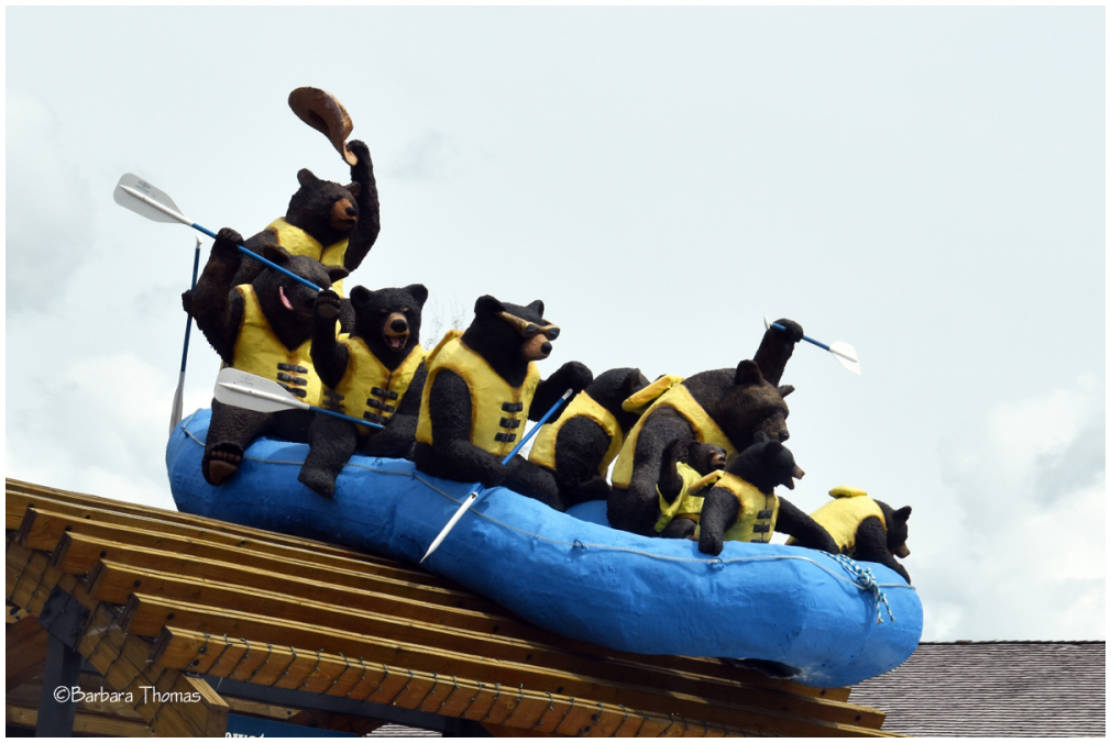 When Bears Go Whitewater Rafting