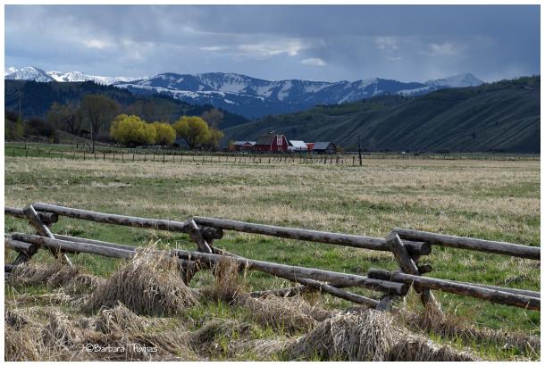 Buck Rail Fence