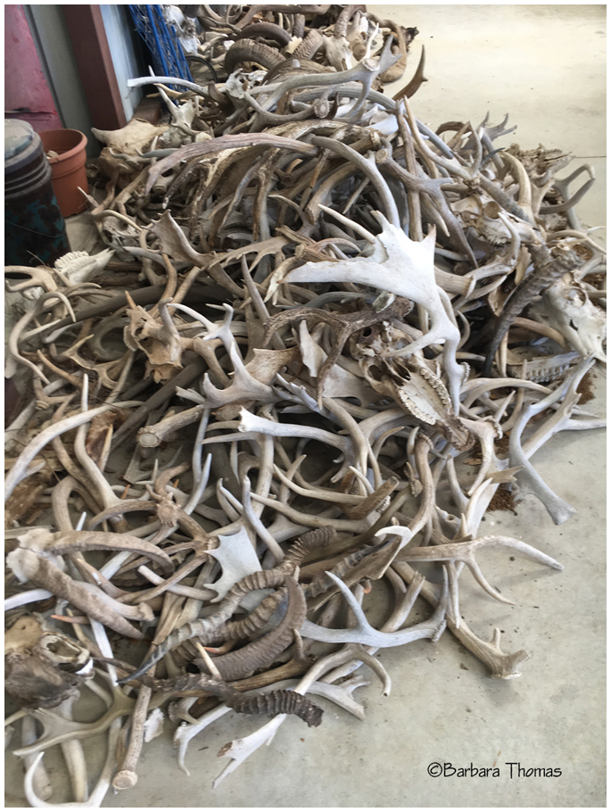 Antler And Horn Pile