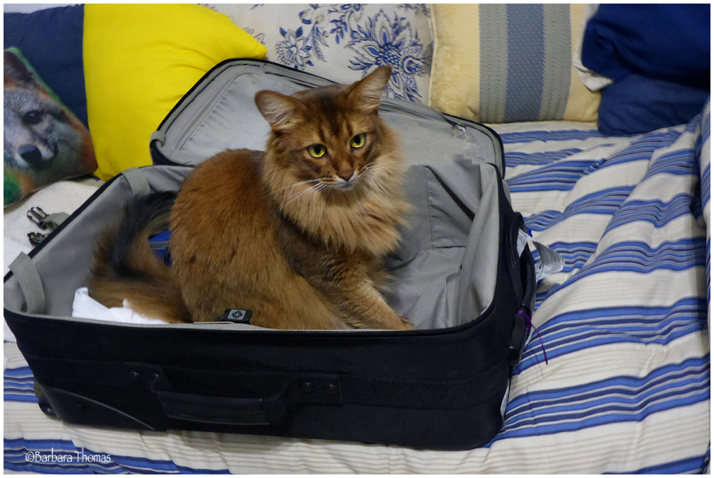 Packing For A Guilt Trip