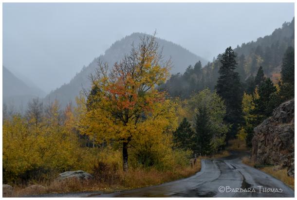 Cold Mountain Rain